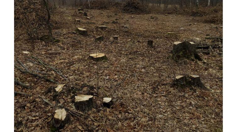 Вырубка леса в Житомирской области
